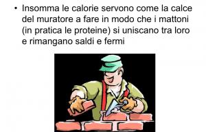 malattia renale calorie